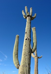 Cactus_CCSearchNetMedia